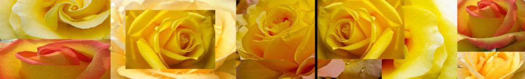 """Изображение для сеновой панели из закаленного стекла """"желтые розы"""""""