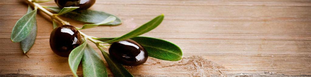 изображение для кухонного фартука ветка, оливки, ветка оливки, дерево