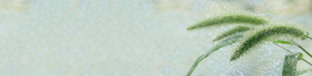изображение для кухонного фартука листья, капли