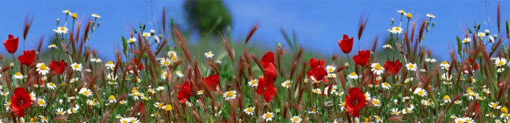 изображение для скинали поле, маки, природа