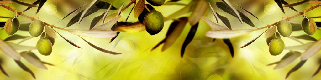 изображение для кухонного фартука оливки, оливковая ветвь, картинка для скинали ветки оливы