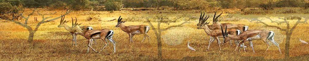 картинка для скинали африка, газели, саванна