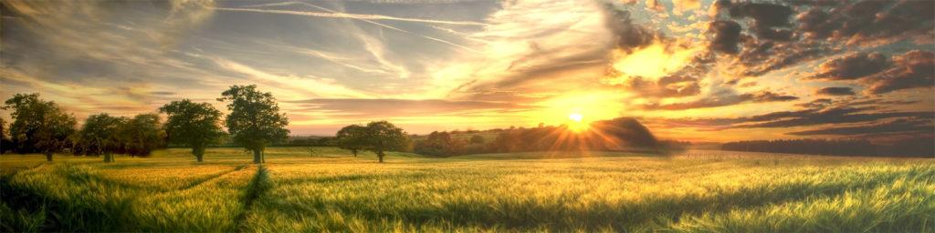 изображение для кухонных фартуков, лес, природа, рассвет, закат, красиво, пейзаж, поле, небо, солнце