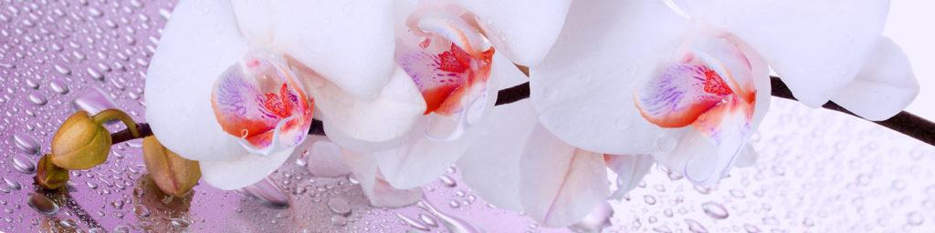 картинка для скинали орхидеи, розовые орхидеи, сиреневые орхидеи, изображение для стеновой орхидеи