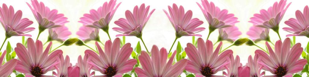 изображения для кухонных фартуков цветы, цветы на белом фоне
