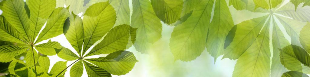 изображения для кухонных фартуков листья, картинка для скинали листья, солнце