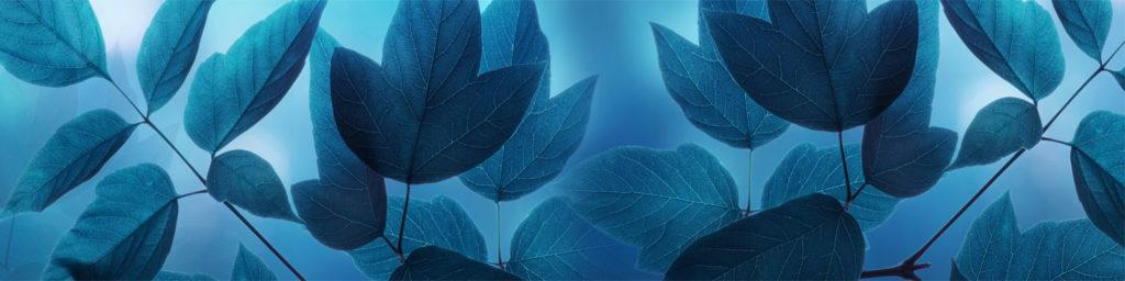 изображения для кухонных фартуков оригинальные, изображение для стеновых листья