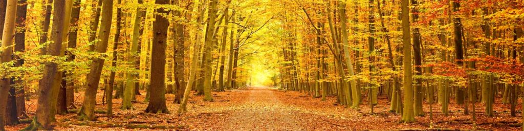 изображения для кухонных фартуков лес, аллея, перспектива