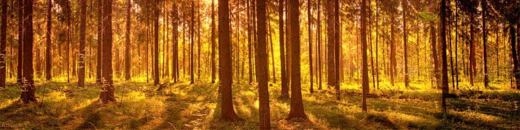 изображения для кухонных фартуков лес, глубина, расширяет пространство