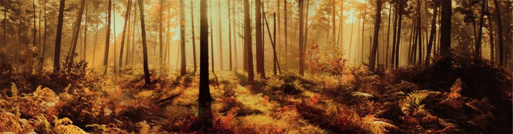 изображения для кухонных фартуков под столешницу венге, лес, перспектива