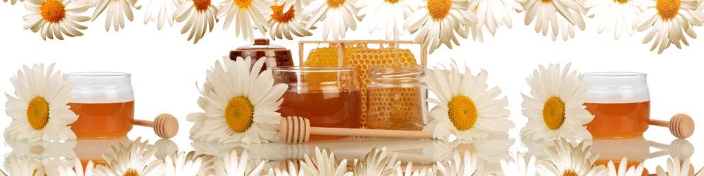 изображения для кухонных фартуков ромашки, на белом фоне, цветы