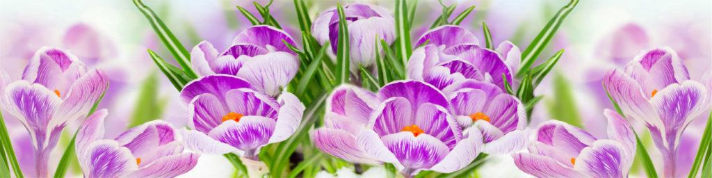изображения для кухонных фартуков цветы, розовые цветы, нежные первоцветы