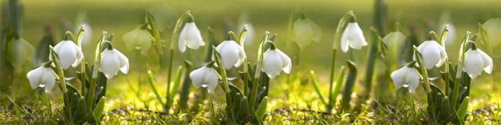 изображения для кухонных фартуков ландыши, зелень, нежные цветы