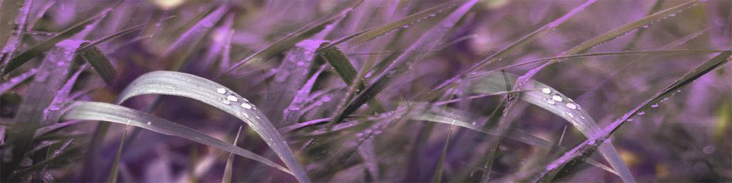 изображения для кухонных фартуков трава, оригинальный фартук