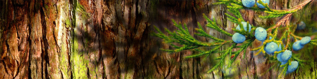 изображения для кухонных фартуков природа, красивая веточка на фоне дерева