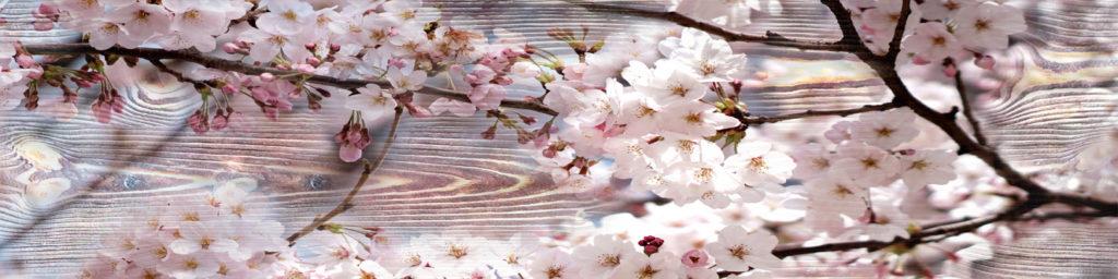 изображения для кухонных фартуков ветка сакуры. фон дерево