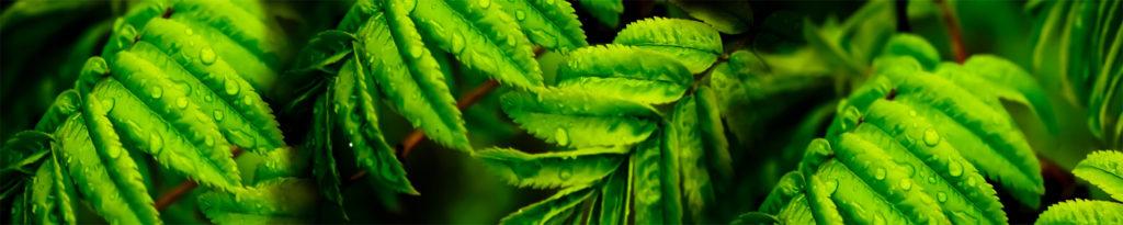 изображение для кухонного фартука зелень, лес, папоротник, трава, капли,роса