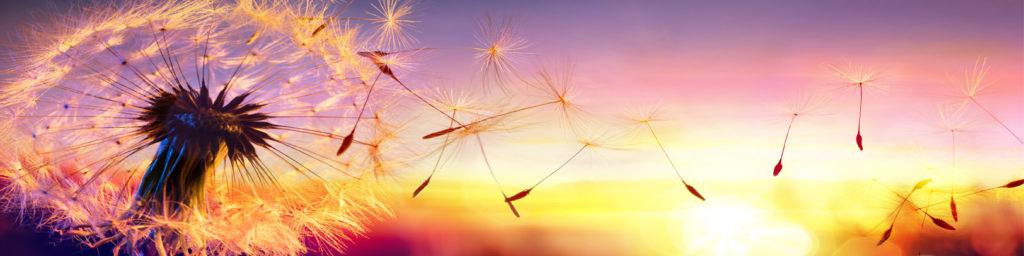 изображение для кухонного фартука одуванчик, пророда, восход, рассвет, небо
